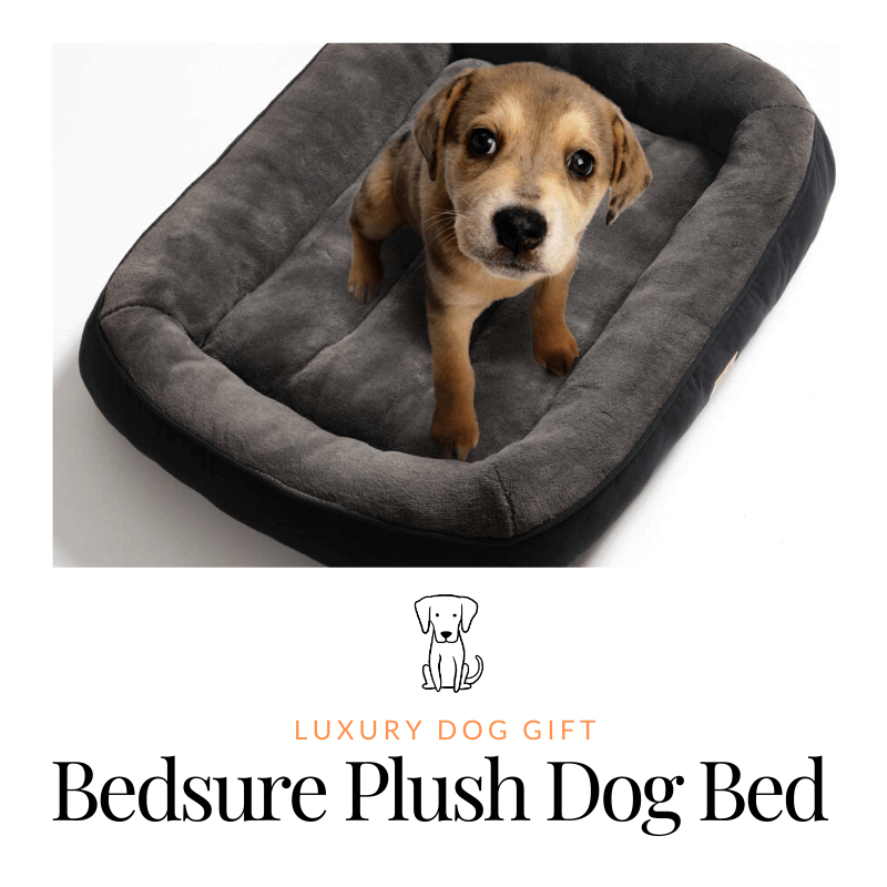 Bedsure Plush Dog Bed review