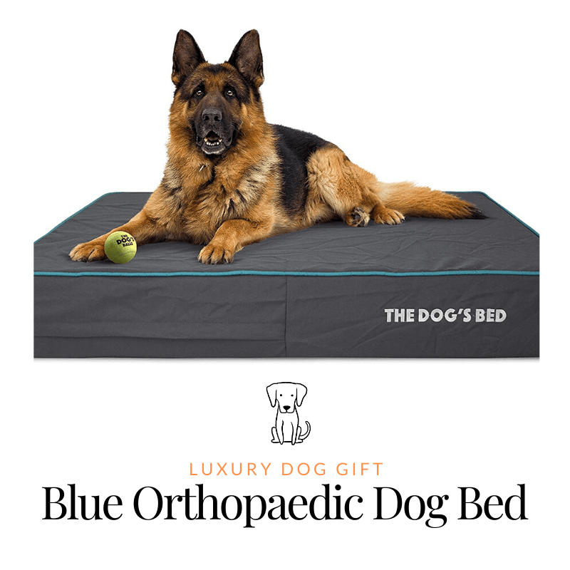 Blue Orthopaedic Dog Bed Review