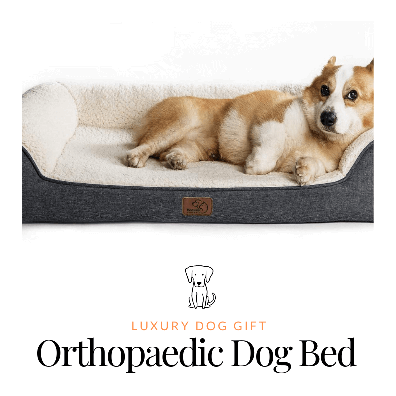 best Orthopaedic Dog Bed