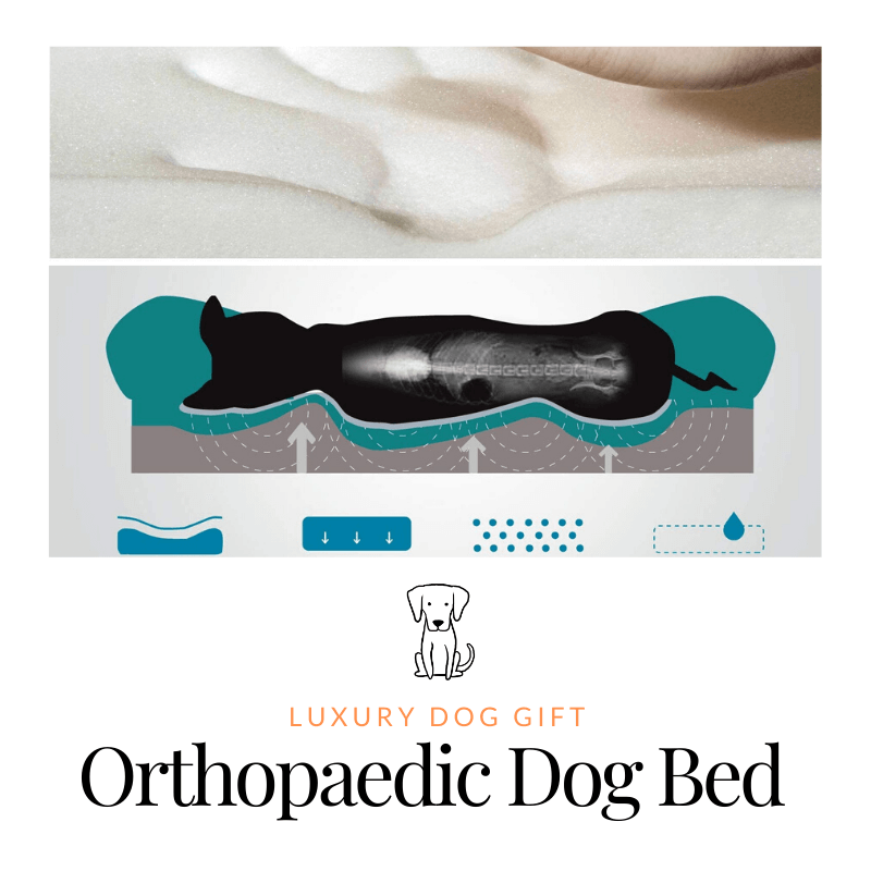 Orthopaedic Dog Bed Review