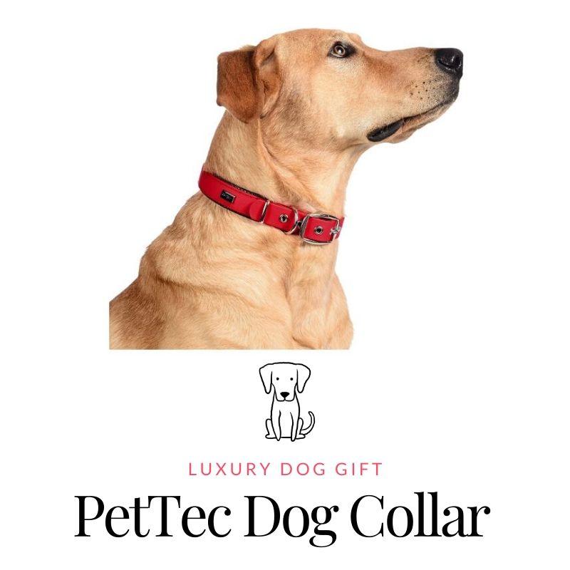 PetTec Dog Collar Review