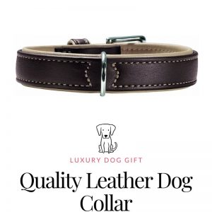 Quality Leather Dog Collar Review
