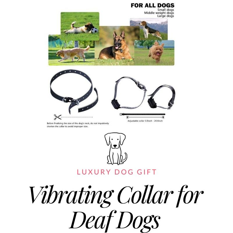Top-Newest Dog Training Collar