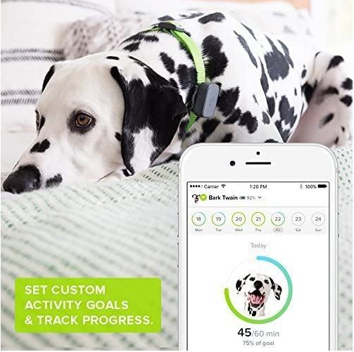 Whistle 3 Pet Tracker Review