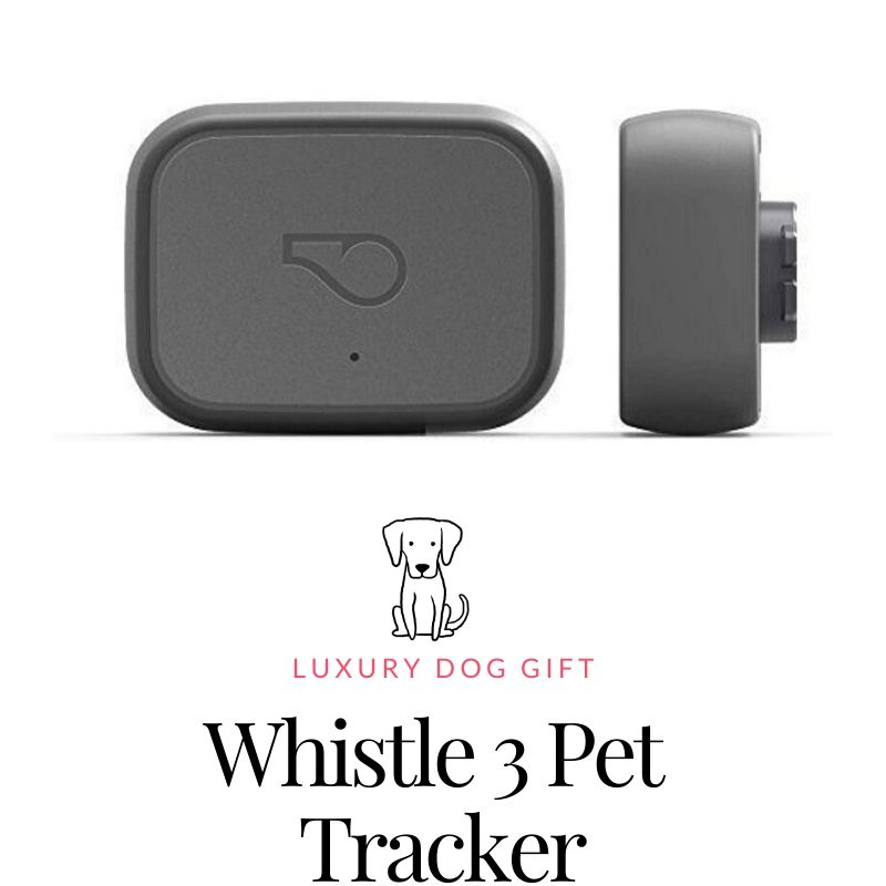 Whistle 3 Review
