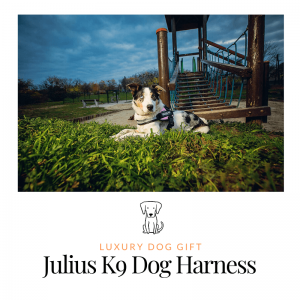 Julius K9 Dog Harness review