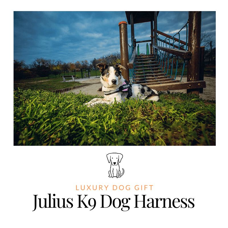 Julius K9 Dog Harness review