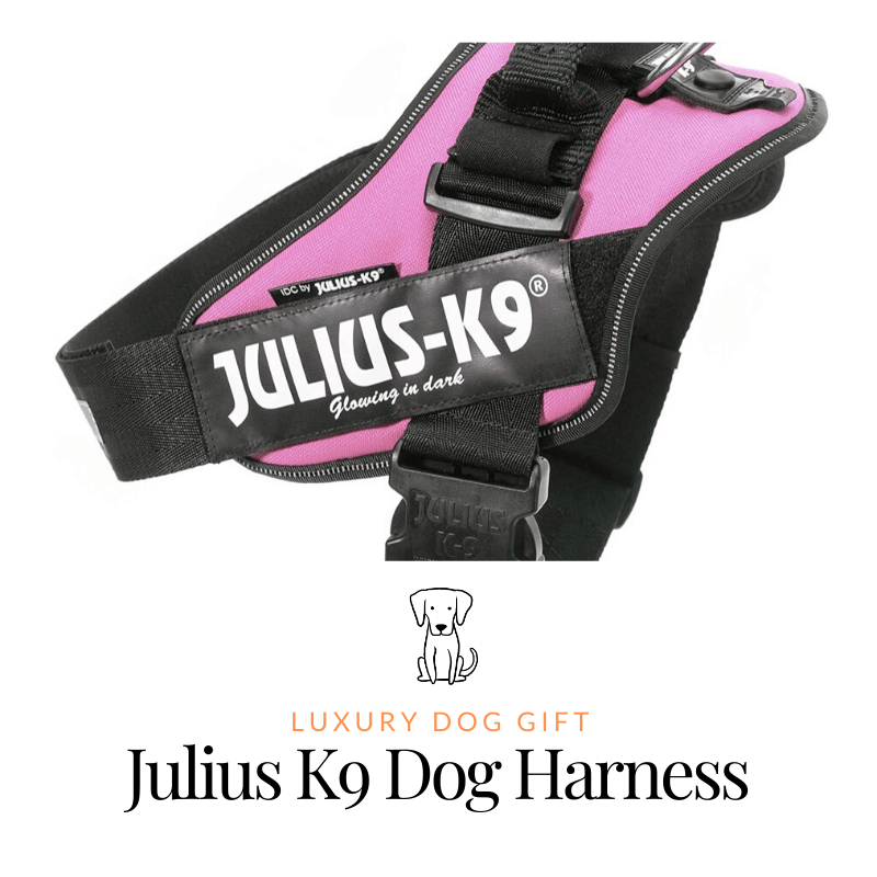 Julius K9 Dog Harness