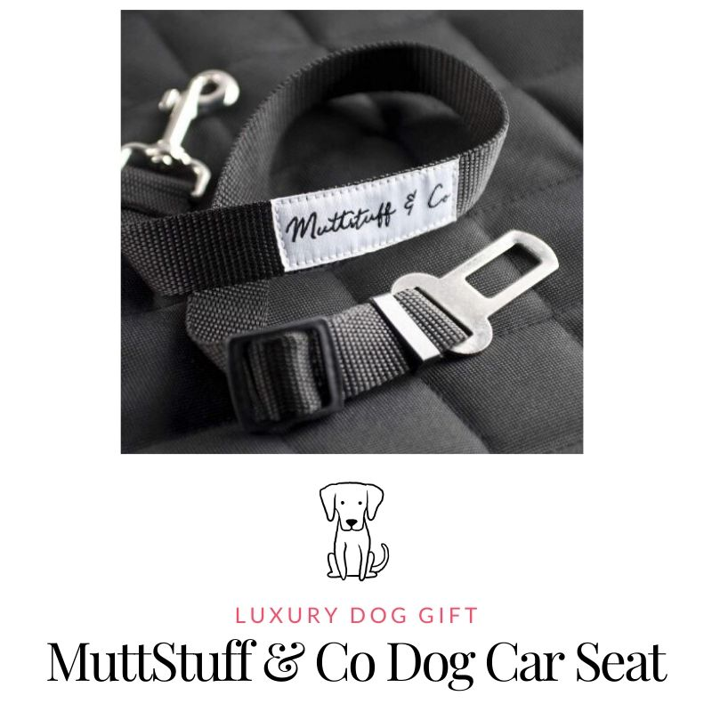 Picture of MuttStuff & Co Dog Car Seat Review