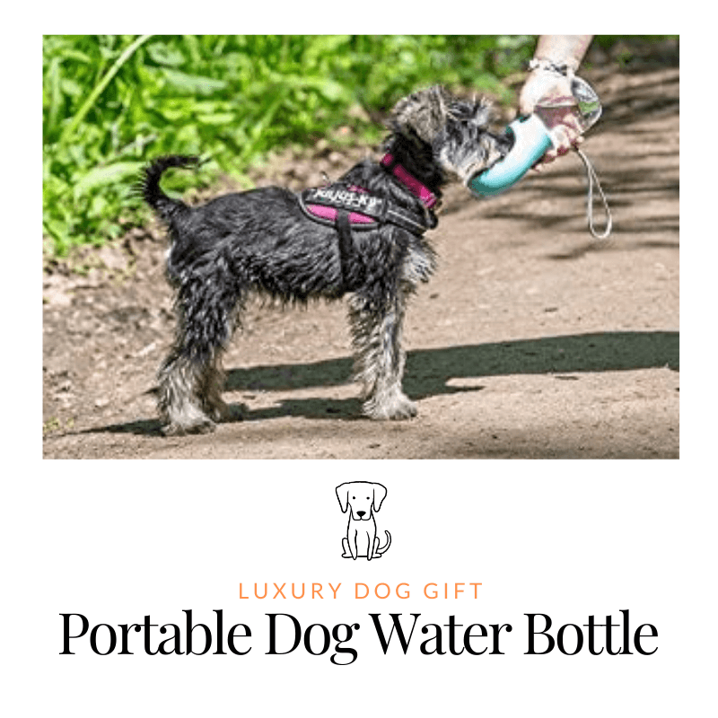 Portable Dog Water Bottle Review